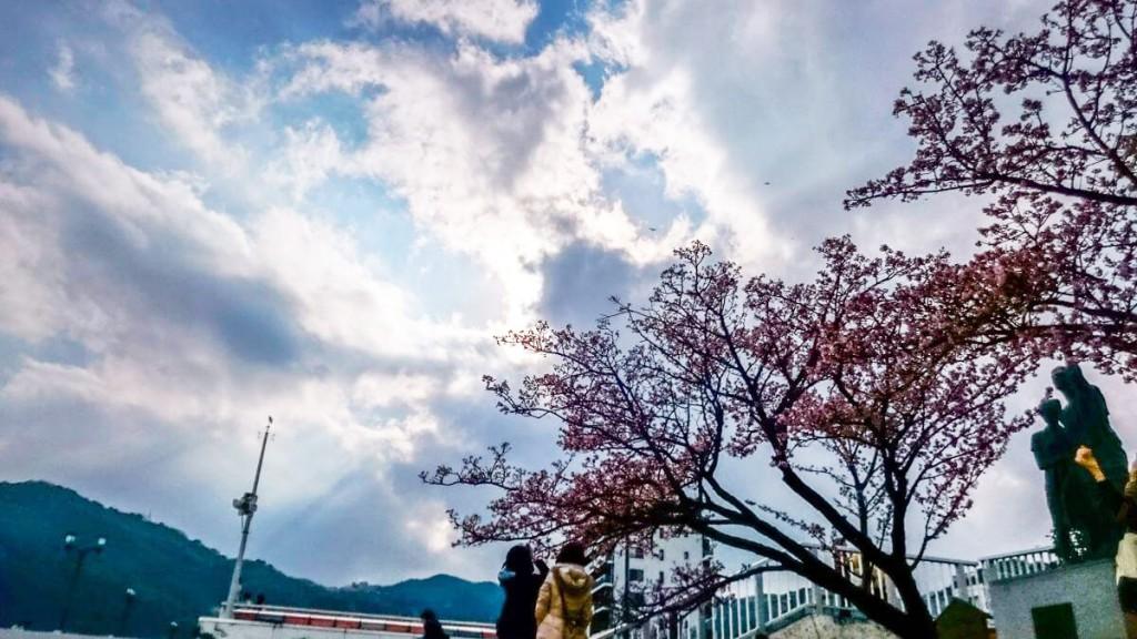 桜 HDR